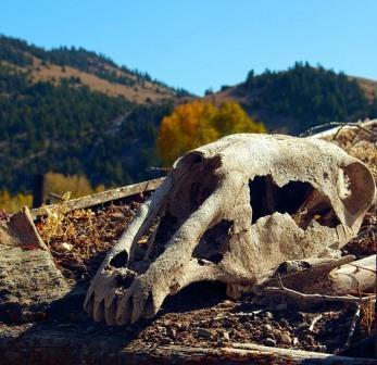 Wann ist ein Pferd tot?